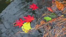 落ち葉と水面 Footage