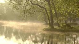 新緑と朝もや立つ湖面 Footage