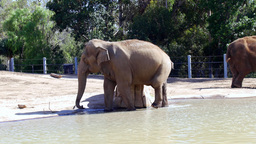 Elephants Relaxing In The Sun stock footage