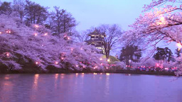 Cherry blossoms of Takada Castle Site Park at night Footage