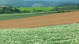 丘のジャガイモ畑と小麦畑 Footage