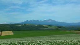大雪山とジャガイモの花咲く夏の丘 Footage
