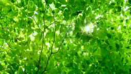 Sunlight and a fresh green forest Footage