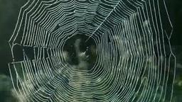 光るクモの巣 Footage