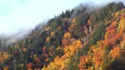 層雲峡渓谷の紅葉と霧 Footage