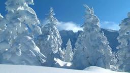 十勝岳温泉の樹氷と上ホロカメットク山 Footage