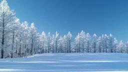 霧氷のカラマツと雪原の丘 Footage