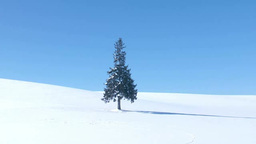 雪原の一本木 Footage