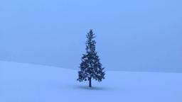 雪原の一本木と降雪 Footage