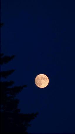 Full moon ภาพวิดีโอ