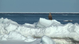 Drifting ice and sea eagles Footage