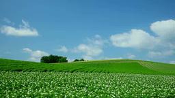 ジャガイモの花咲く丘と流れる雲 Footage