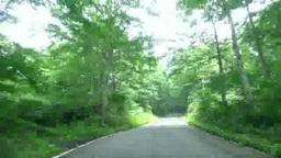 森の中の道を行く Footage