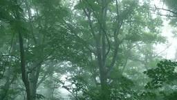 Fog beech forest Footage