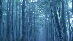 霧のブナの森と道 Footage