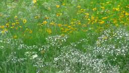 風に揺れる花 Footage