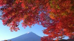 Autumn leaves of Lake Kawaguchi and Mt. Fuji Footage