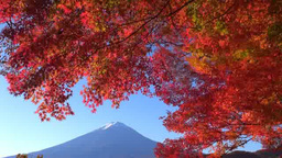 Autumn leaves of Lake Kawaguchi and Mt. Fuji Stock Video Footage