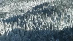 双湖台から望む雪の針葉樹の森とペンケトー Footage