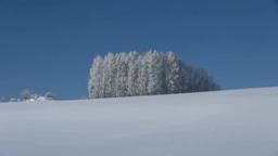 雪原の丘と霧氷のカラマツ Footage