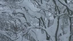 雪降るブナ林 Footage
