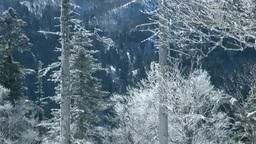 霧氷の森と降雪 Footage