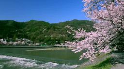 嵐山と渡月橋の桜 Footage