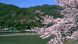 嵐山と渡月橋の桜 Stock Video Footage