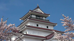 Tsuruga castle and cherry blossoms Stock Video Footage