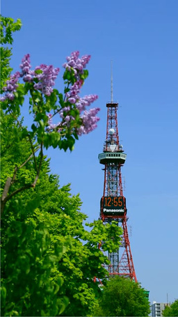 Lilacs in Odori Park and Sapporo TV Tower Stock Video Footage