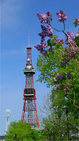 Lilacs in Odori Park and Sapporo TV Tower Footage