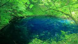十二湖の新緑の青池 Footage