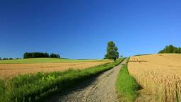 小麦畑の道と一本木 Stock Video Footage