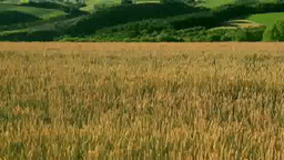 Wheat fields and the Tokachi mountain range Footage