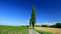 夏の丘とポプラの丘 Footage