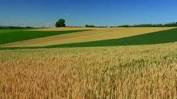 小麦畑と夏の丘 Stock Video Footage