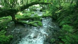原生林と流れ Stock Video Footage