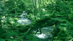 原生林と流れ Footage