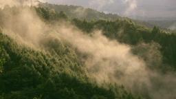 森を這う霧 Stock Video Footage