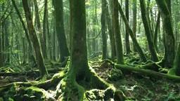 富士山の青木ヶ原樹海 Footage