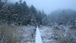 雪降る木道と森 Stock Video Footage