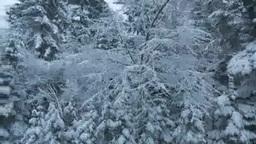 車窓から見る雪の森 Footage