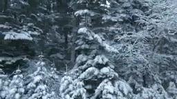 車窓から見る雪の森 Stock Video Footage