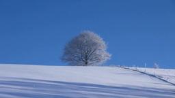 霧氷の一本木とダイヤモンドダスト Stock Video Footage