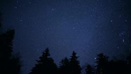 星空と森 Footage