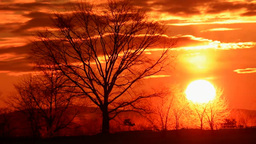 Tree and Sunset Stock Video Footage