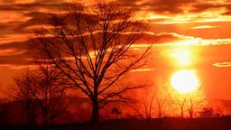 Tree and Sunset Footage