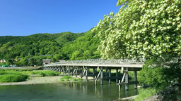 Arashiyama and Togetsu-Kyo Stock Video Footage