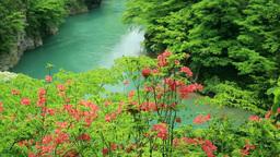 Azalea valley and Ri 抱返 of the fresh green Stock Video Footage