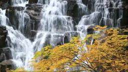 立又渓谷の紅葉と一ノ滝 Stock Video Footage